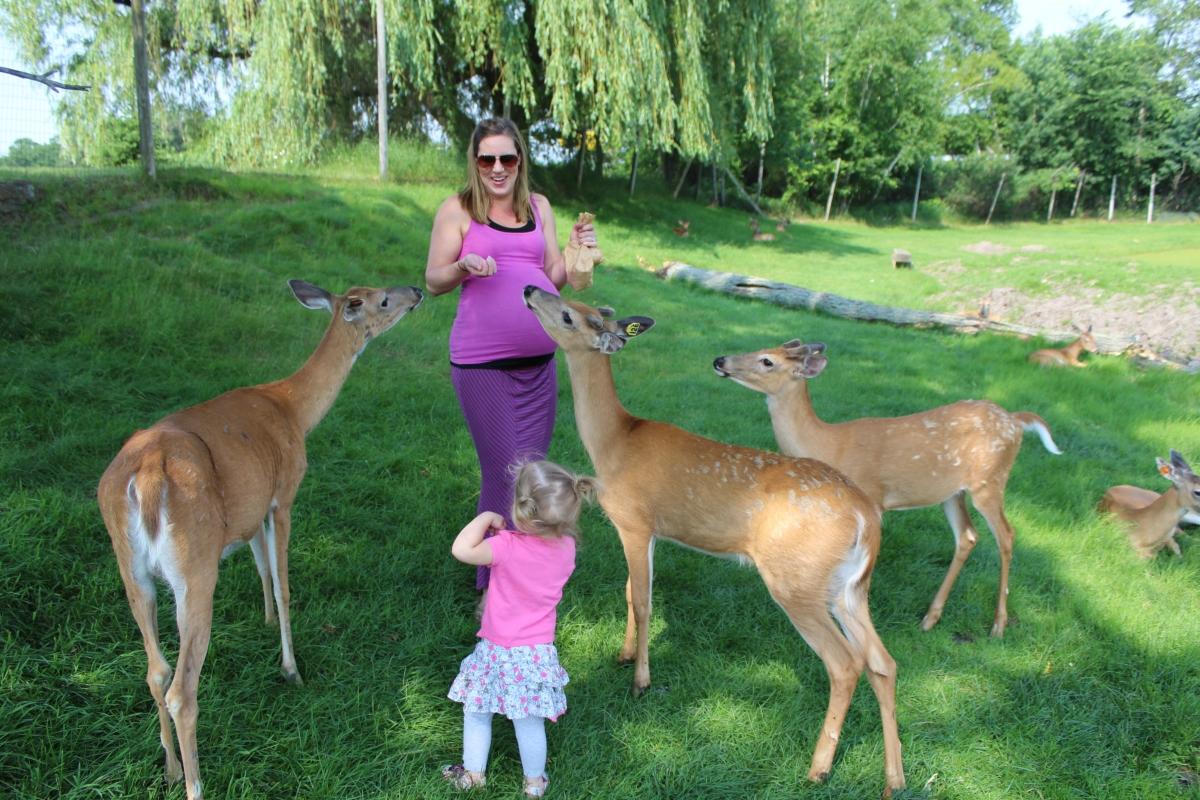 37 weeks. The deer are intrigued.