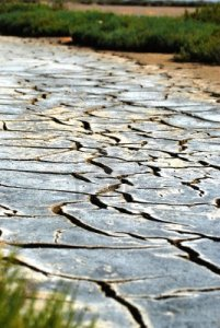 14319317-dry-river-bed-clay-with-cracks